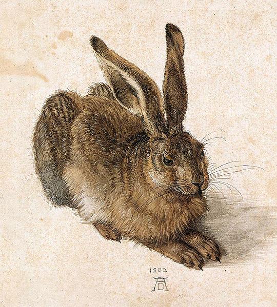 Hare-dierr